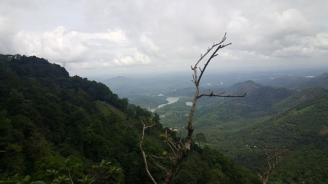 Malabar_rainforests_Kerala.jpg